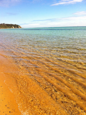 the fabulous shore 2013